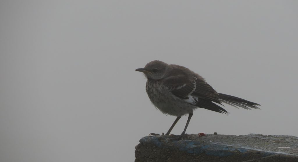 bird-in-fog